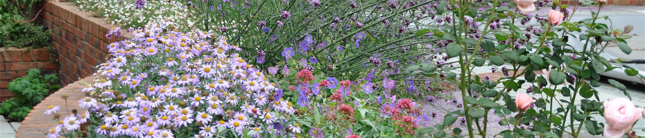 Colourful flowers in a garden by Hampshire garden designer Martyn Gingell
