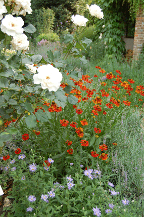 A flower border by Hampshire garden designer Martyn Gingell